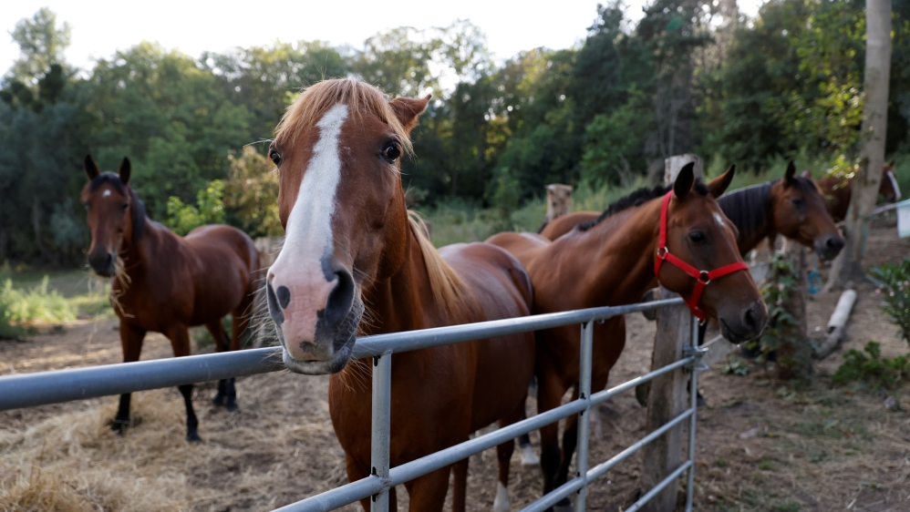 France: Horses killed, mutilated in possible satanic rite crime