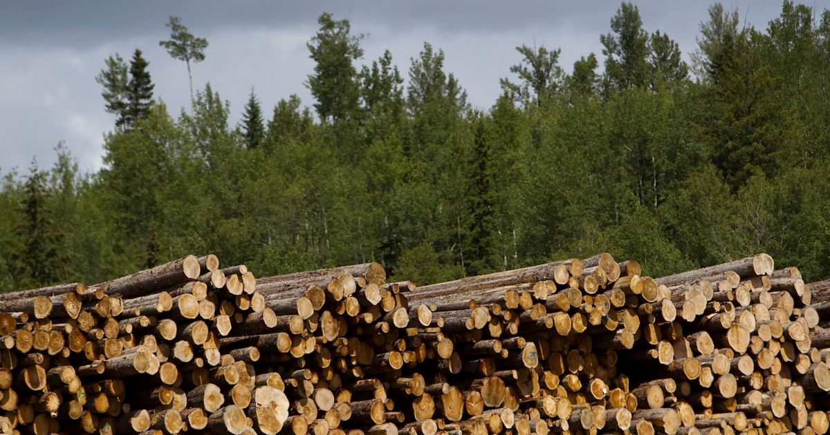P&G shareholders push board to publish report on deforestation