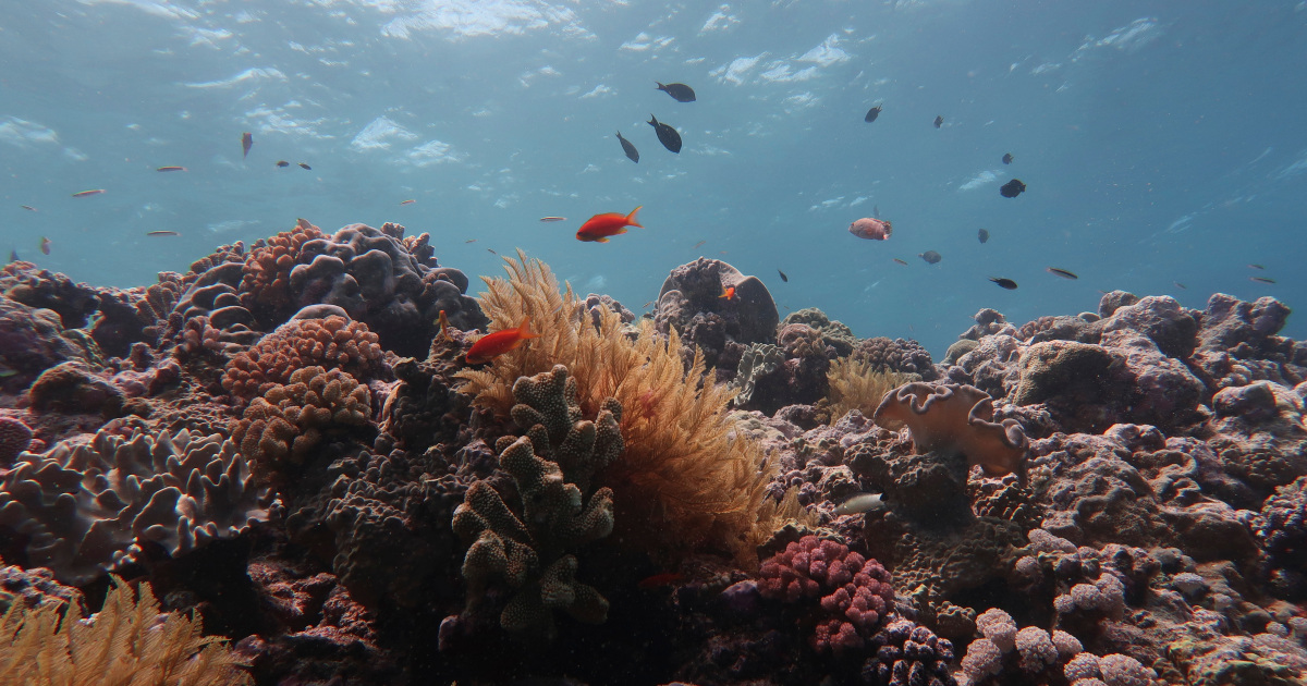 Global heating kills half the corals on the Great Barrier Reef