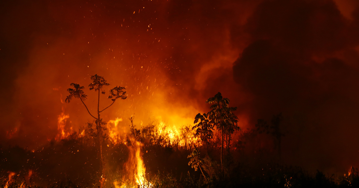 Deforestation in Brazil's Amazon rises for first time in 4 months