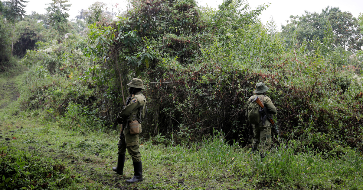 Dozens killed in eastern DRC in latest attacks blamed on ADF