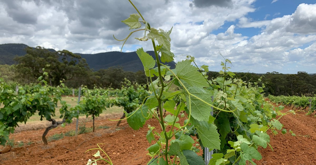 Party over? China trade rift threatens Australian winemakers