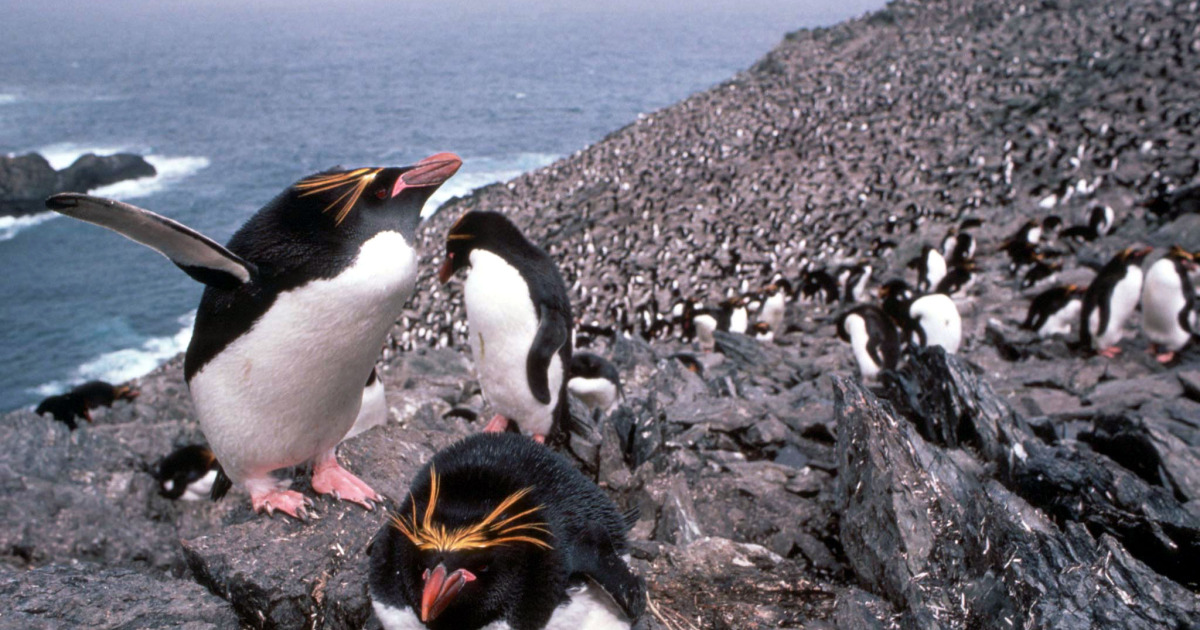 Giant iceberg could collide with south Atlantic penguin colony